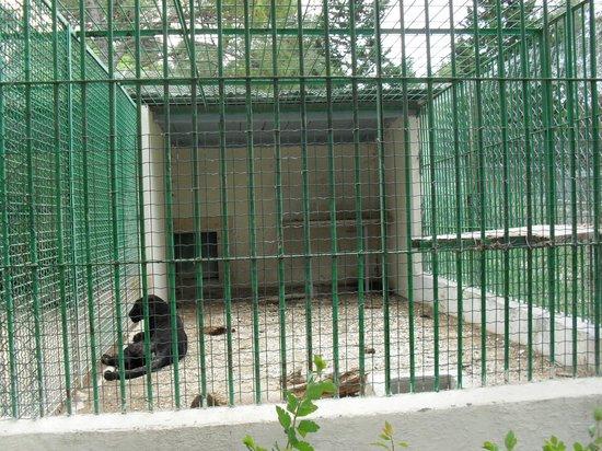 Zoo Fauverie du Faron : Le territoire de chasse de la panthère noir...