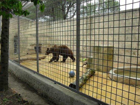 Zoo Fauverie du Faron : La liberté d'un ours...