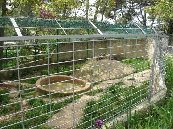 Zoo Fauverie du Faron : Le  territoire  du seigneur des forêts....
