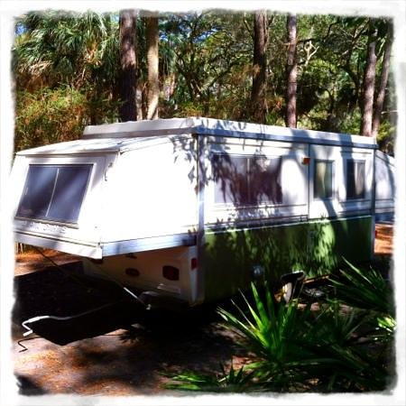 Hunting Island State Park Campground: the palm foliage is beautiful!