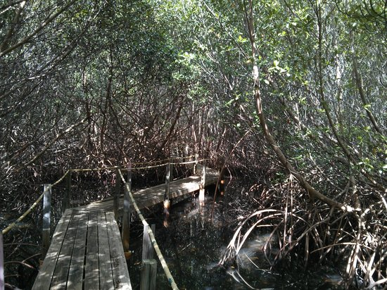 South Coast Horizons: Mangroves