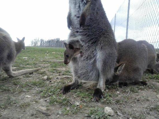 Parc Animalier de Saint Clar