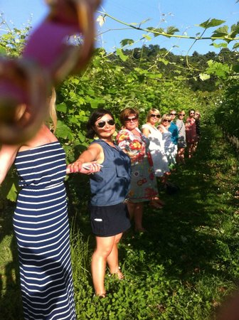 Cantine Basile: In the vineyard