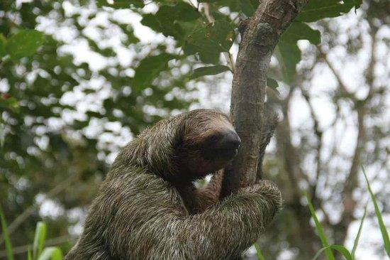 Arenal Natura Parque Ecológico: Hehehehehe! 3 Toed Sloth