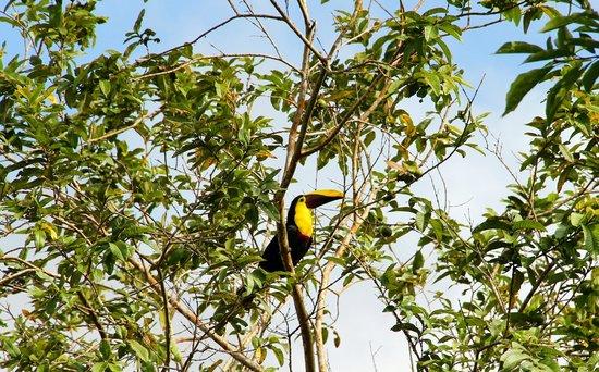 Arenal Natura Parque Ecológico: Tucan