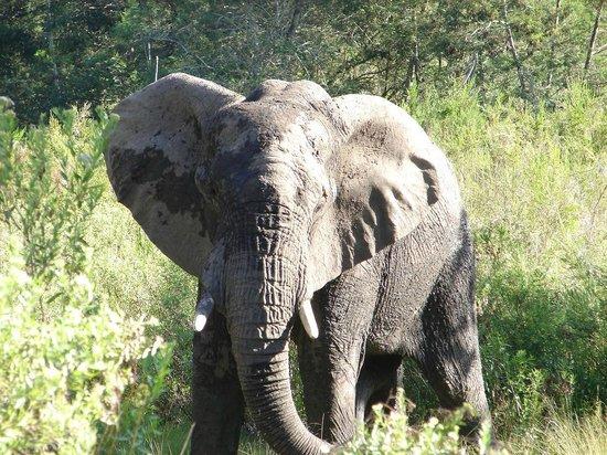Gondwana Game Reserve: wenige Meter von uns entfernt