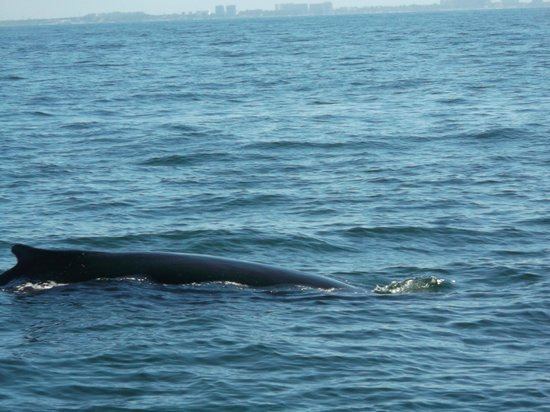 Hotel Riu Vallarta : Baleine à bosses Baie de Bandéras
