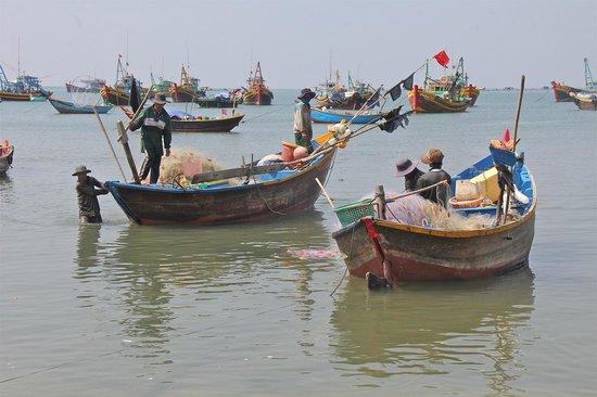 Mui Ne Harbor: Bringing in nets