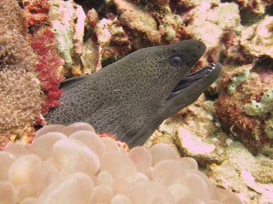 Sea Fun Divers - Day Trips: M o r e n a