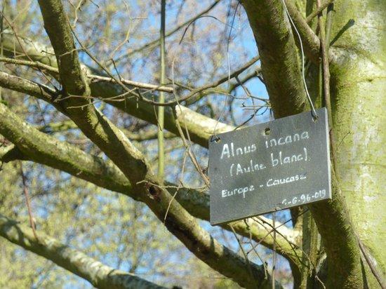 Arboretum de la Vallee-aux-Loups: arboretum