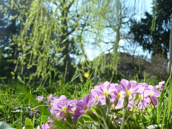 Arboretum de la Vallee-aux-Loups: flore