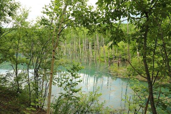 Blue Pond: 遊歩道から見た景色