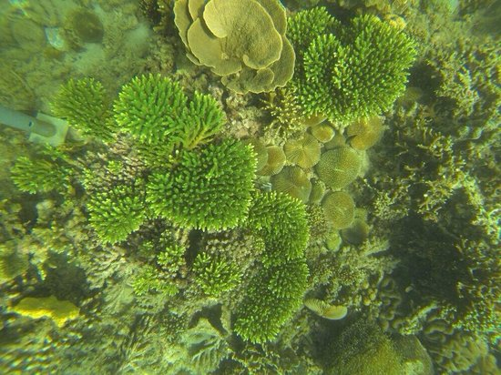 Usukan Cove Lodge: Beautiful corals