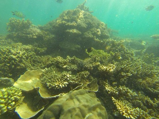 Usukan Cove Lodge : Beautiful corals
