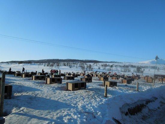 Tromsø Wilderness Centre: As casas dos cachorros