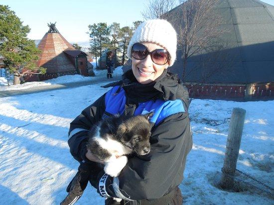 Tromsø Wilderness Centre: cachorro baby