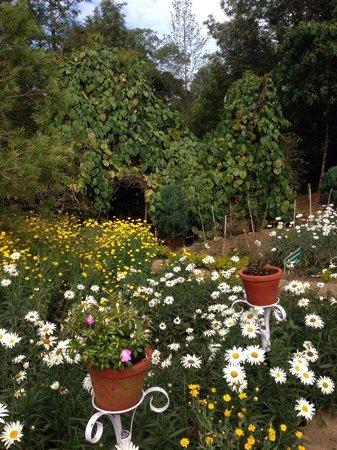 Nature Zone Resort : Jardin fleuri