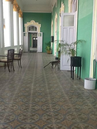 Lalitha Mahal Palace Hotel: The veranda off the heritage rooms is beautiful.  This monkey thought so too.