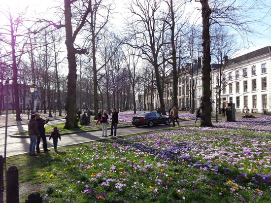 Hotel Des Indes, a Luxury Collection Hotel: the crocus flowers outside of the hotel