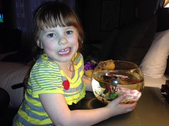 "Kimpton Alexis Hotel: Goldfish they brought for our daughter which she named ""Goldie"""