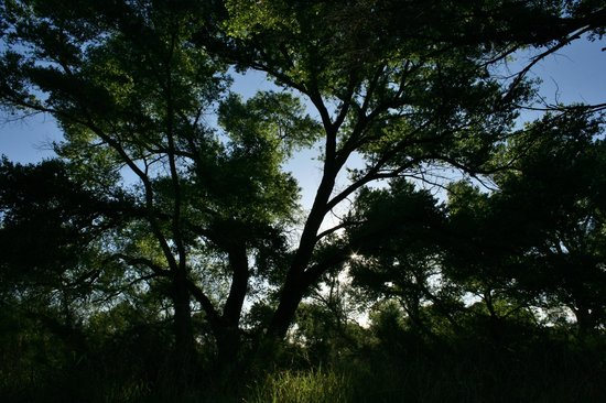 San Pedro Riparian National Conservation Area: Sunlight through the trees