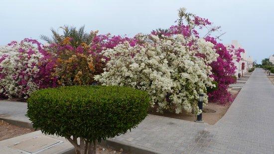 Coral Beach Resort: Территория отеля