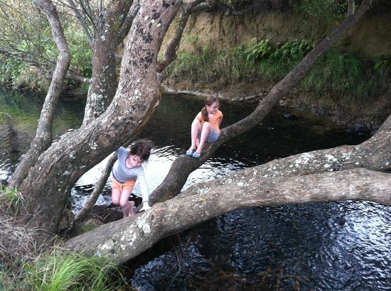 Nikau Cave Cafe : Stream in front of cafe
