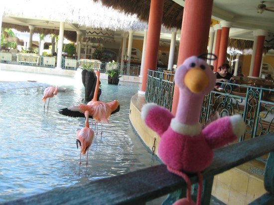 Iberostar Costa Dorada: The Flamingos were cool