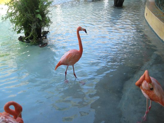 Iberostar Costa Dorada: There were 6 flamingos - cool