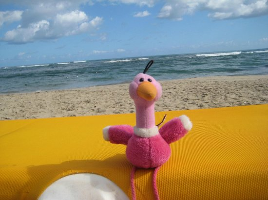 Iberostar Costa Dorada: Enrique's last day on the beach