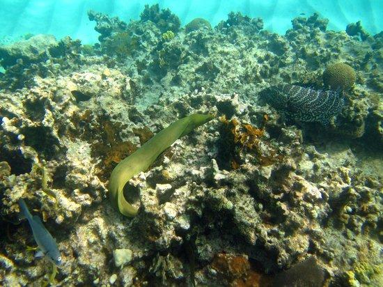 Christopher Columbus Condos: Cemetery Reef