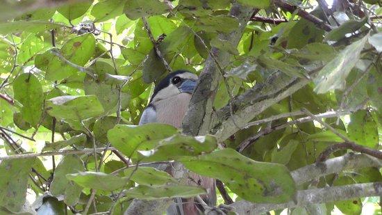 Hotel Manatus: One of my favorite birds!