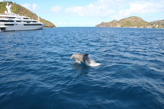 Cool Caraïbes : Rencontre avec les dauphins retour des Saintes