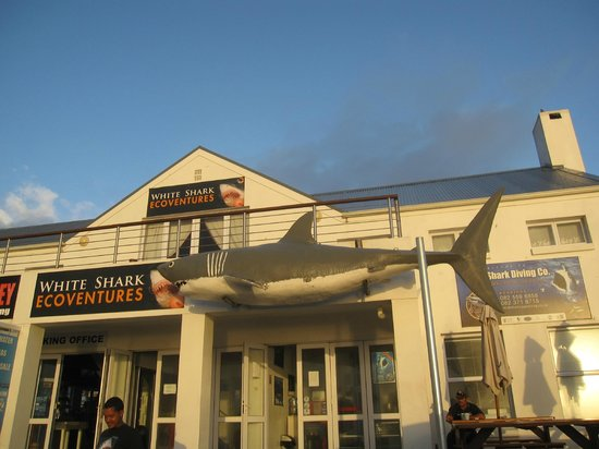 White Shark Diving Company: Front Entrance