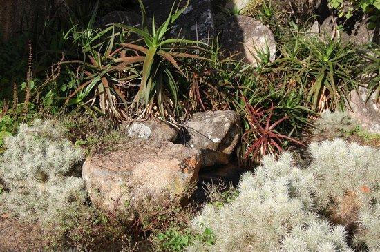 Matobo Hills : Flora