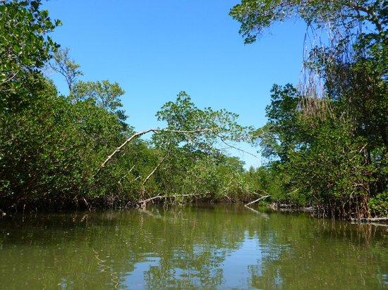"""J.N. """"Ding"""" Darling National Wildlife Refuge: kayaking"""