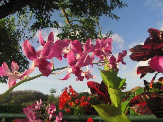 Top O' Tobago Villa & Cabanas : Caribbean Life...