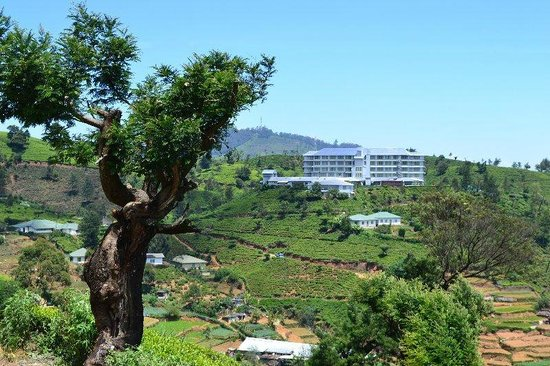 Heritance Tea Factory: 360 degree view
