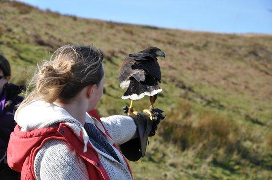 North Devon Hawk Walks: Claire with Macbeth