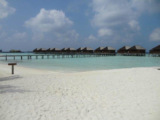 Veligandu Island Resort & Spa: Wasser Buncalos