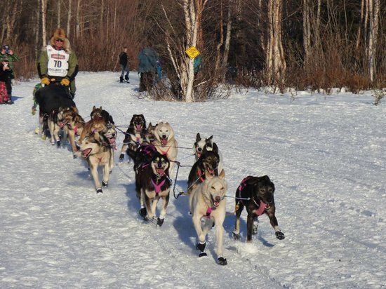 907 Tours: Anchorage - Day Tours: Here they come!