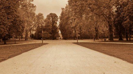 Parco Ducale: Il grande stradone che porta alla Reggia Ducale all'interno del parco