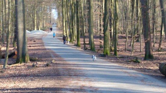 Forêt de Soignes : Cani liberi