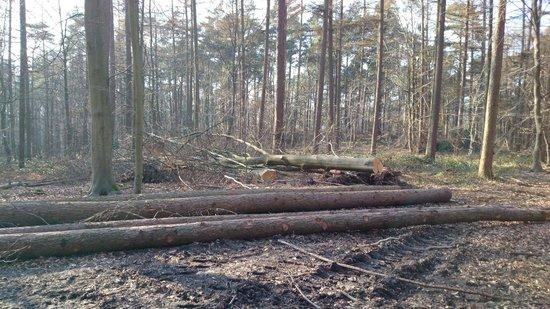 Forêt de Soignes : Non proprio un giardino