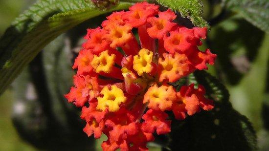 El Silencio Lodge & Spa : Beautiful flower!