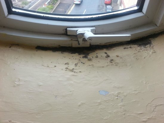 The Holyrood Hotel: Some of the mold on the sew view window!