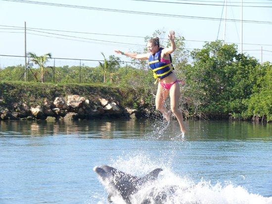 Melia Las Americas: getting thrown up in the air by the dolphins at El Delfinario