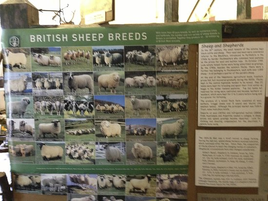 Sheep Breeds Poster