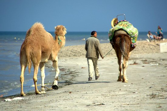SENTIDO Rosa Beach : Camel Train