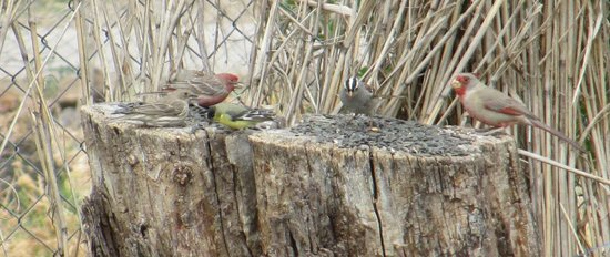 Tucson Audubon's Paton Center for Hummingbirds: Variety of birds on this stump feeder